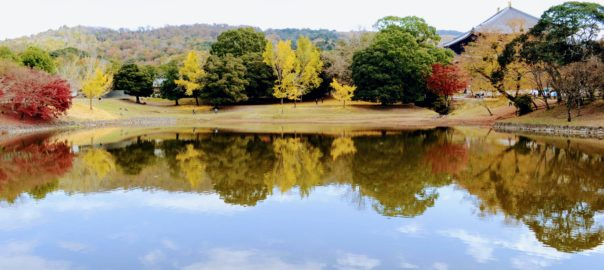 Paysage au temple Todai-ji