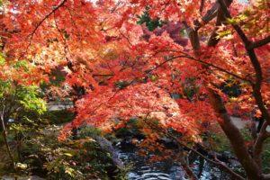 La chasse aux feuilles rouges, momijigari