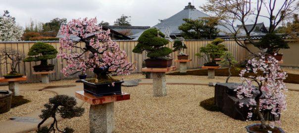 Jardin de bonsaï